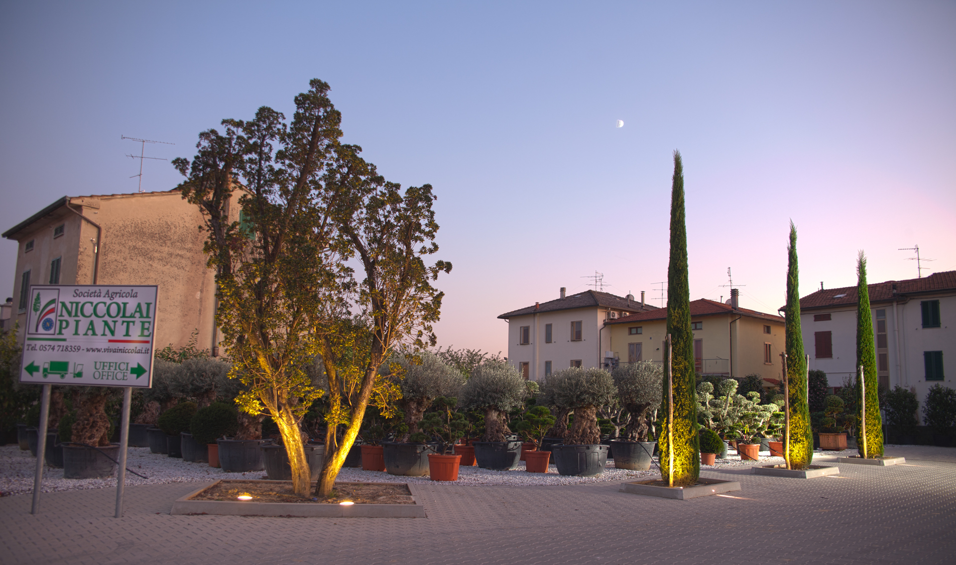 Niccolai Vivai – Fotografia professionale vivaistica